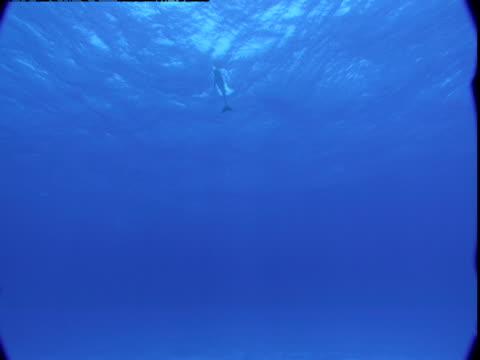 vídeos de stock e filmes b-roll de a dolphin ascends toward the surface of the ocean. - vir à superfície