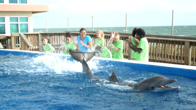 dolphin at marine education park doing tricks, splashing - captive animals stock videos & royalty-free footage