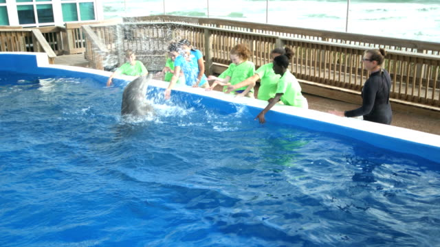 dolphin at marine education park doing tricks, splashing - pacific islander male stock videos & royalty-free footage