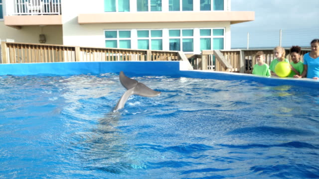 dolphin at marine education park doing tricks - elementary age stock videos & royalty-free footage