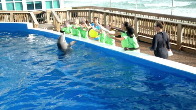 dolphin marine bildung park machen tricks, winken - 12 13 years stock-videos und b-roll-filmmaterial