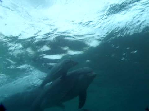 dolphin ballet - unknown gender stock videos & royalty-free footage