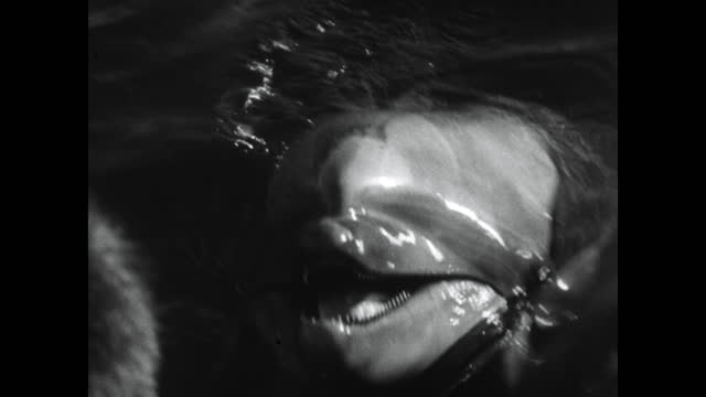 cu dolphin heads in water with open mouths; 1964 - animal nose stock videos & royalty-free footage