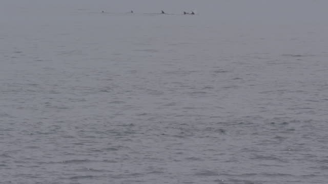 dolphin in the ocean of jeju island / jeju-do, south korea - 背びれ点の映像素材/bロール