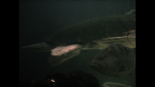 dolphin in the water eating a fish, a sea turtle swims by - sea turtle stock videos & royalty-free footage