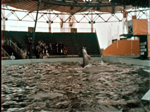 dolphin jumping up to trainer on pedestal at new york world's fair/ ws dolphins standing up on tails in front of audience/ queens ny - esposizione universale di new york video stock e b–roll