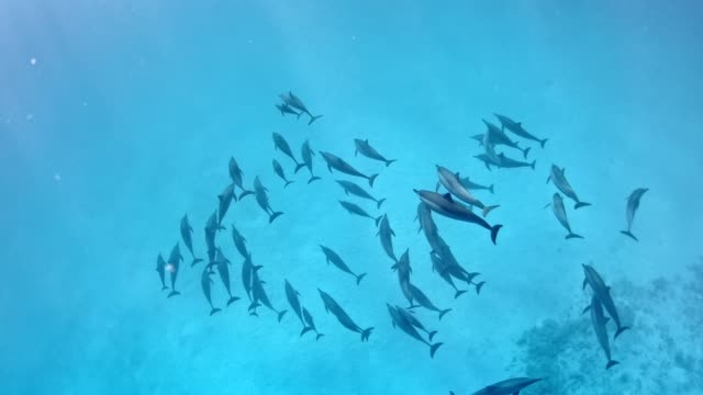 dolphin pack. underwater scenery - dolphin stock videos & royalty-free footage