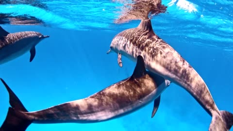 dolphin pack. underwater scenery - sea life stock videos & royalty-free footage