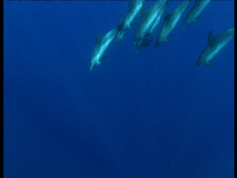 dolphin pod dives, azores - communication stock videos & royalty-free footage