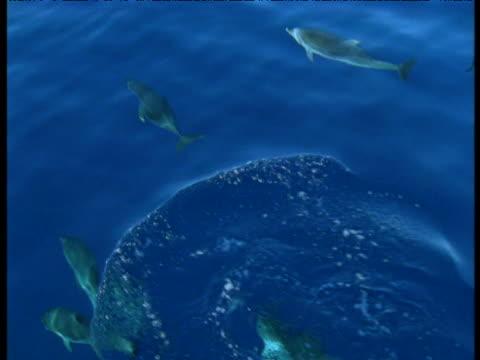 dolphin pod swimming underwater occasionally surfaces, azores - 大西洋諸島点の映像素材/bロール