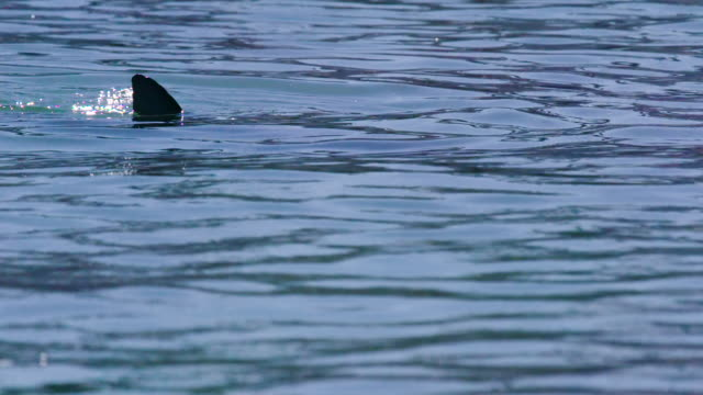 a dolphin showing its fluke - cetacea stock videos & royalty-free footage