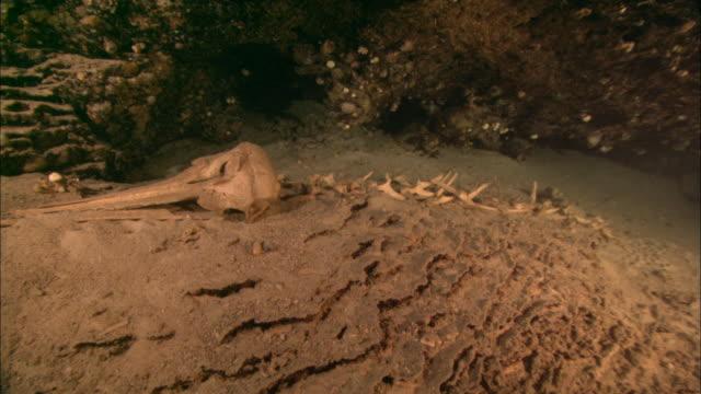 dolphin skeleton on shelf in cave, borneo, malaysia, southeast asia - 動物の骨点の映像素材/bロール