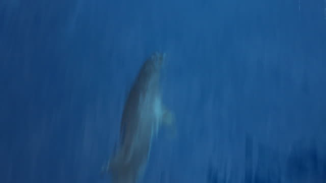 dolphin swimming. - dolphin stock videos & royalty-free footage