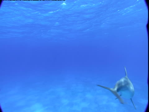 A dolphin swims in shallow waters.
