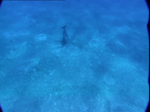 dolphin swims over a sandy seabed - cetacea stock videos & royalty-free footage