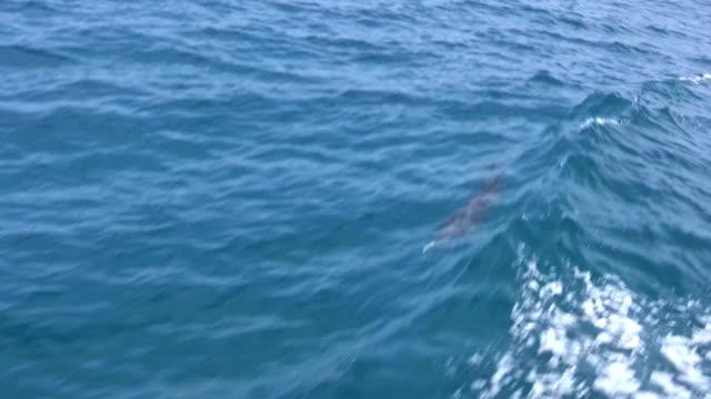 HD: Delphin