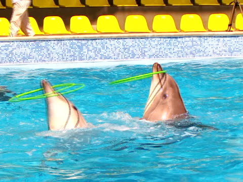 dolphins and hula hoop - performance stock videos & royalty-free footage