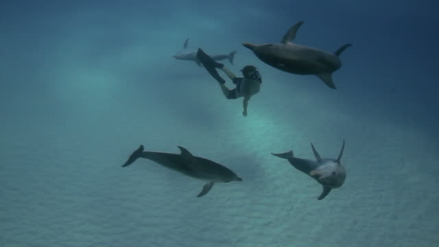 Dolphins and Snorkeler