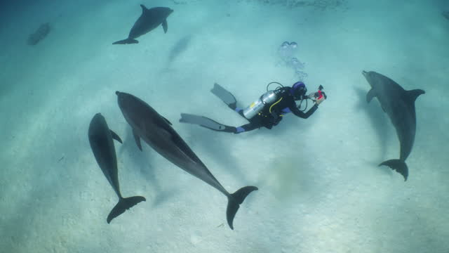 dolphins circling around filming diver in the red sea - red sea stock videos & royalty-free footage