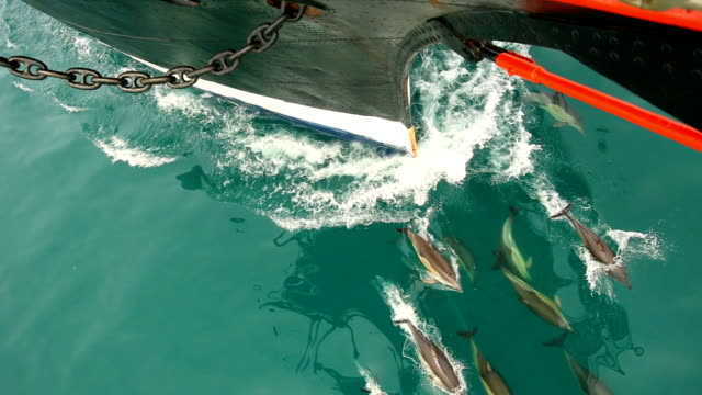 dolphins escorted ship - ship's bow stock videos & royalty-free footage