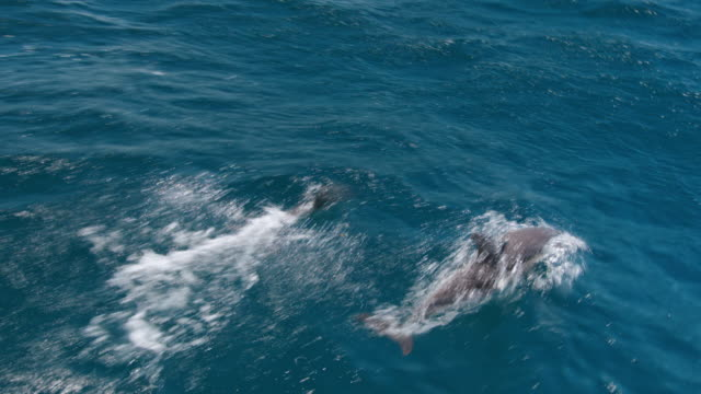 Dolphins glide through the water off the Strait of Gibraltar