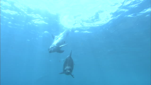 dolphins in ocean - tursiope video stock e b–roll