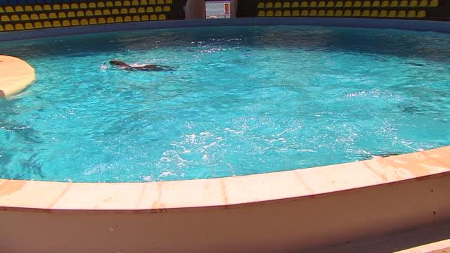 イルカのプール - ネズミイルカ点の映像素材/bロール