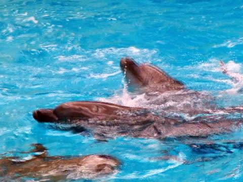 delfine im pool - kleine gruppe von tieren stock-videos und b-roll-filmmaterial
