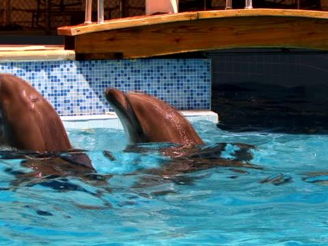 vidéos et rushes de dauphins dans la piscine - quatre animaux