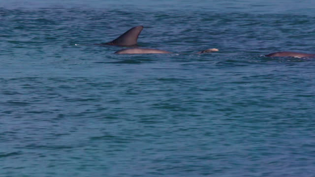 dolphins in the water. - cetacea stock videos & royalty-free footage