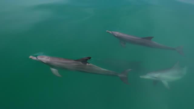 vídeos de stock, filmes e b-roll de dolphins near the shore of australian beach - roaz