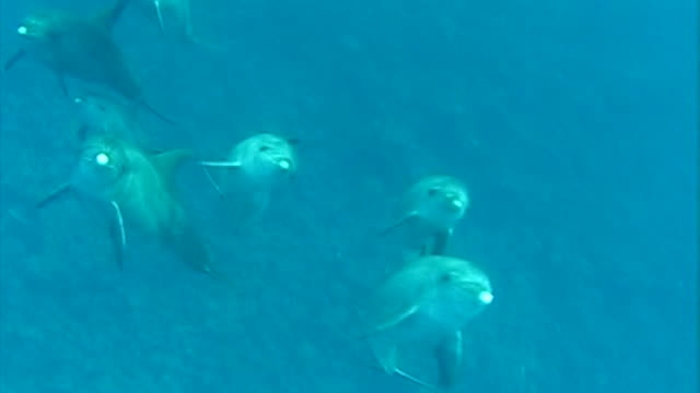dolphins of the red sea - pod group of animals stock videos & royalty-free footage