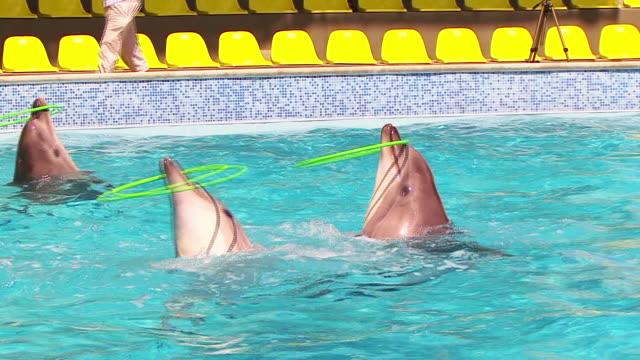 イルカと遊んでフラフープ - ネズミイルカ点の映像素材/bロール