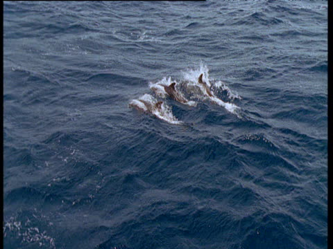 dolphins porpoise away from camera, venezuela - coordination stock videos & royalty-free footage