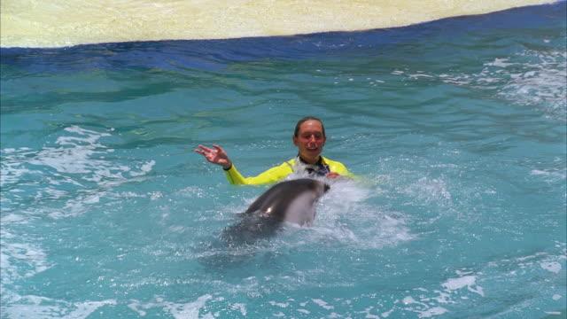 montage dolphins show at miami seaquarium / key biscayne, florida, usa - performance stock videos & royalty-free footage