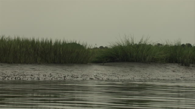 dolphins surface in calmly rippling water near a flock of herons. - cetacea video stock e b–roll