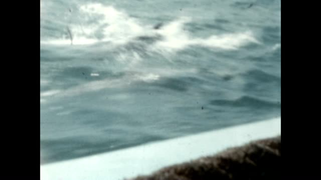 dolphins swim along side tour boat as it sails along miami beach - miami dade county stock videos and b-roll footage