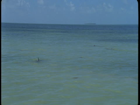 dolphins swim in shallow water. - shallow stock videos & royalty-free footage