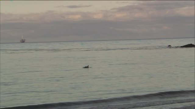 KTLA Dolphins Swim Near Oil Spill at Refugio State Beach in Santa Barbara County on May 21 2015 105000 gallons of crude oil spilling down a canyon...