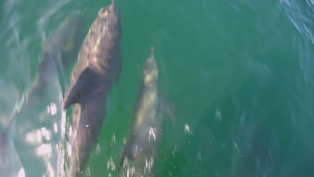 slo mo dolphins swimming in front of a boat - dolphin stock videos & royalty-free footage
