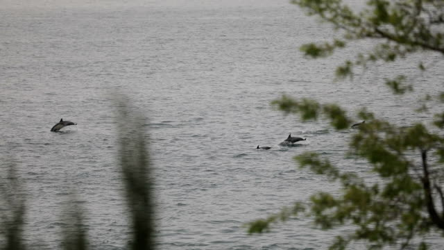 vídeos de stock e filmes b-roll de dolphin's swimming stock video - golfinho
