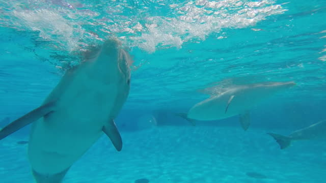 dolphins swimming underwater at a marine park in france - communication stock videos & royalty-free footage