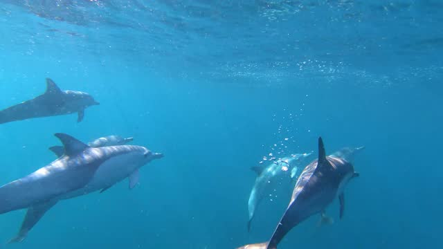 dolphins swimming underwater - colours stock videos & royalty-free footage