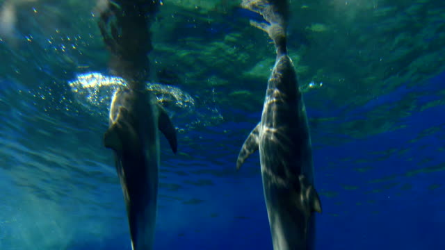dolphins swimming - cetacea stock videos & royalty-free footage