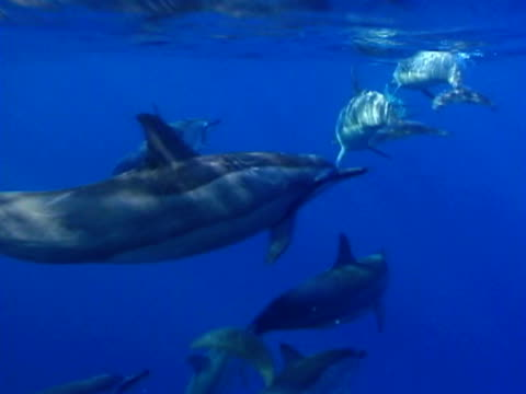 dolphins swimming - small group of animals stock videos & royalty-free footage