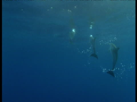 dolphins swims to water's surface then dive, azores - communication stock videos & royalty-free footage