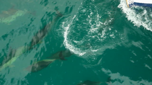 dolphins travel with the ship - passenger ship stock videos & royalty-free footage