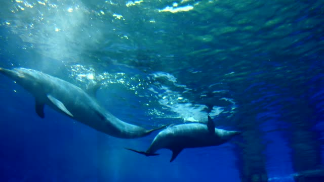 dolphins - bottle nosed dolphin stock videos & royalty-free footage