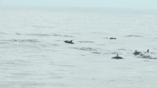 HD: Dolphins