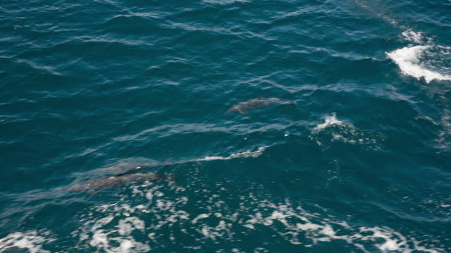 dolphins - cetaceo video stock e b–roll